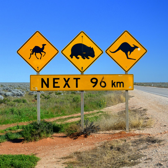 nullarbor-drive-chris-fithall-540x540