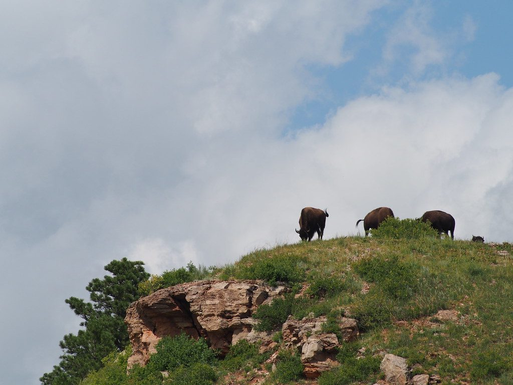 Three brown cows standing on a rocky hillside, cloudy blue sky behind them,